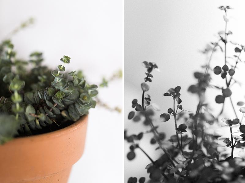 entretenir-ses-plantes-vertes-interieur-arrosage-bouturage-lumiere-conseils-avoir-la-main-verte-mint-and-paper-marine-szczepaniak-blog-lifestyle03